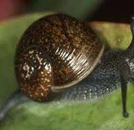 Business-Description-of-Snailery-Business-plan-in-Nigeria