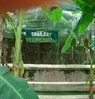 Business-Description-of-Snailery-Business-plan-in-Nigeria-2