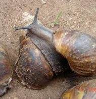 Business-Description-of-Snailery-Business-plan-in-Nigeria-4