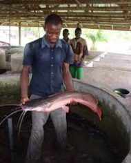 Fish-Farming-Processing-And-Marketing-Business-Plan-In-Nigeria-1