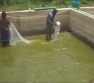 Fish-Farming-Processing-And-Marketing-Business-Plan-In-Nigeria-2