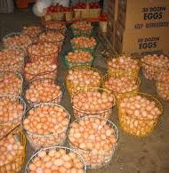 POULTRY-BUSINESS-PLAN-IN-NIGERIA-4