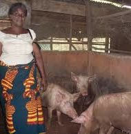 Piggery-Business-plan-in-Nigeria3