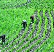 RICE-CULTIVATION-AND-PROCESSING-BUSINESS-PLAN-IN-NIGERIA