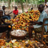 COCOA-FARMING-AND-PROCESSING-BUSINESS-PLAN-IN-NIGERIA
