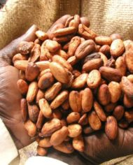 COCOA-FARMING-AND-PROCESSING-BUSINESS-PLAN-IN-NIGERIA-2