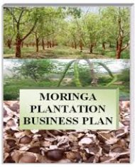 MORINGA-FARM-BUSINESS-PLAN-IN-NIGERIA