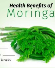 MORINGA-FARM-BUSINESS-PLAN-IN-NIGERIA-4-1024×538