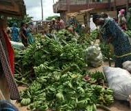 Plantain-Farming-and-Processing-Business-Plan-in-Nigeria-3