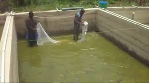 Fish Farming, Processing And Marketing Business Plan In Nigeria 2
