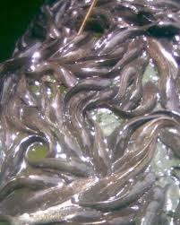 Fish Farming, Processing And Marketing Business Plan In Nigeria