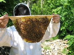 Bee-keeping (Apiary) Business Plan in Nigeria