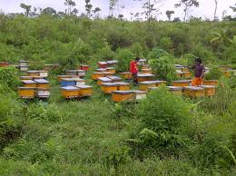Bee-keeping (Apiary) Business Plan in Nigeria 2