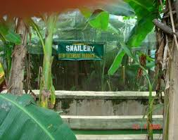 Business Description of Snailery Business plan in Nigeria 2