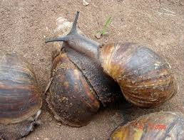 Snail Production and Processing Business Plan