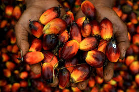 PALM OIL PRODUCTION AND PROCESSING BUSINESS PLAN IN NIGERIA 3
