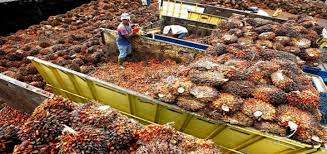 PALM OIL PRODUCTION AND PROCESSING BUSINESS PLAN IN NIGERIA