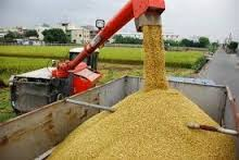RICE CULTIVATION AND PROCESSING BUSINESS PLAN IN NIGERIA 3
