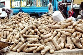 YAM PRODUCTION BUSINESS PLAN IN NIGERIA 1