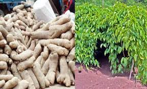 YAM PRODUCTION BUSINESS PLAN IN NIGERIA 2