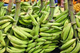 Plantain Farming and Processing Business Plan in Nigeria 1