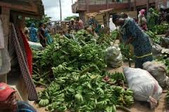 Plantain Farming and Processing Business Plan in Nigeria 3
