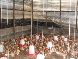 free poultry farming business plan
