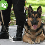 The Job Of A Dog Handler