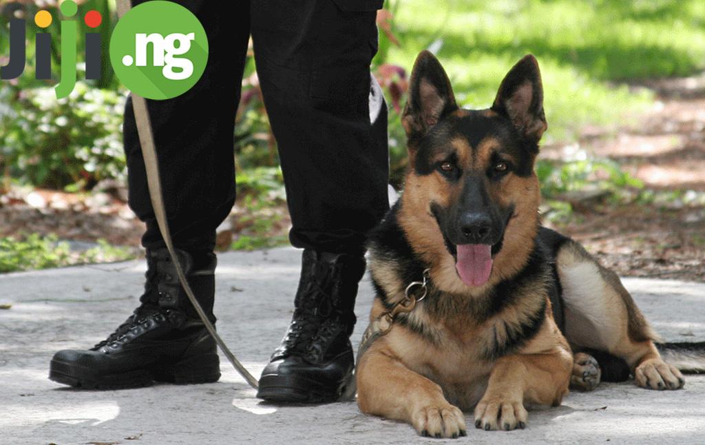 The Job Of A Dog Handler