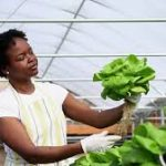 hydroponics-business-plan-in-nigeria5