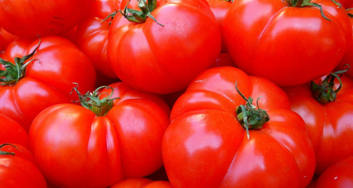TOMATO FARMING AND SALES BUSINESS PLAN IN NIGERIA