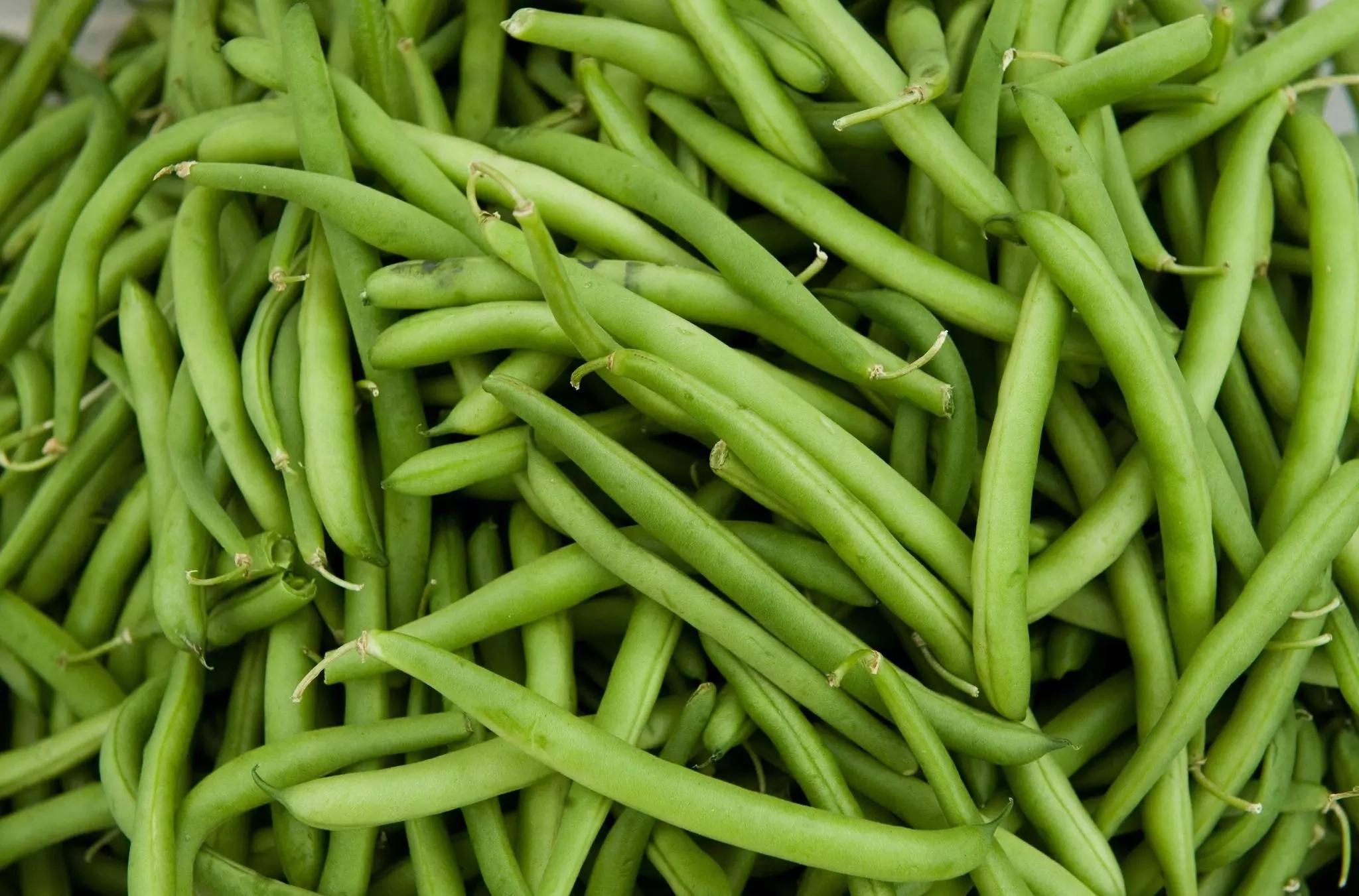 BEANS/COWPEA FARMING BUSINESS PLAN IN NIGERIA