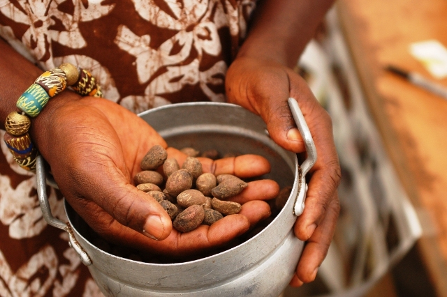 SHEA BUTTER PRODUCTION & PROCESSING BUSINESS PLAN IN NIGERIA