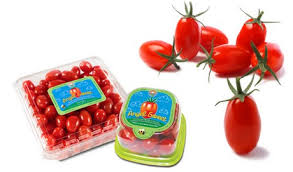 TIN TOMATO PASTE PRODUCTION BUSINESS PLAN IN NIGERIA