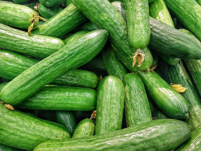 CUCUMBER FARMING AND PROCESSING BUSINESS PLAN IN NIGERIA