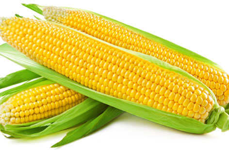 MAIZE FARMING AND PROCESSING BUSINESS PLAN IN NIGERIA