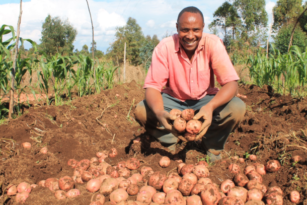 POTATO FARMING AND PROCESSING BUSINESS PLAN IN NIGERIA