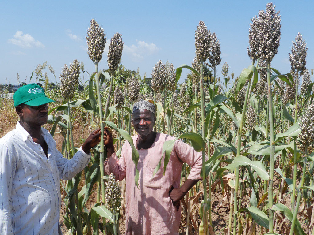 SORGHUM FARMING AND PROCESSING BUSINESS PLAN IN NIGERIA