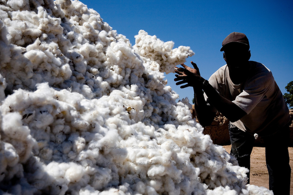 COTTON FARMING AND PROCESSING BUSINESS PLAN IN NIGERIA