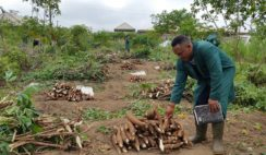How to Start A Cassava Processing Business