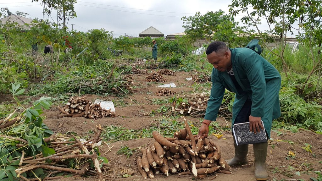 How to Start A Cassava Processing Business