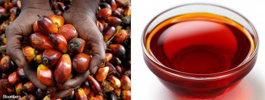 How To Start A Palm Oil Processing Business in Nigeria