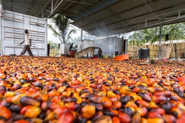 How To Start A Palm Oil Processing Business