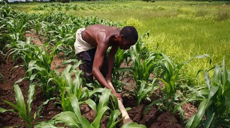 Apply for Leventis Foundation Free One year Agricultural Training Programme for 2018/2019 Session