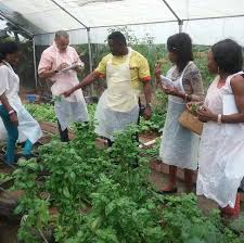 Executive Summary of Hydroponics Vegetable Farm in Nigeria