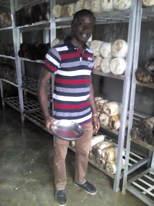 Executive Summary of Mushroom Business Plan in Nigeria