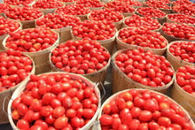 Executive Summary of Tomatoes Business Plan in Nigeria.